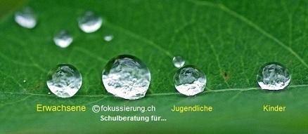 www.fokussierung.ch